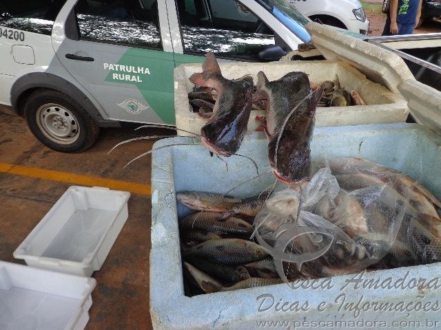 119kg de pescado apreendido em Votuporanga-SP