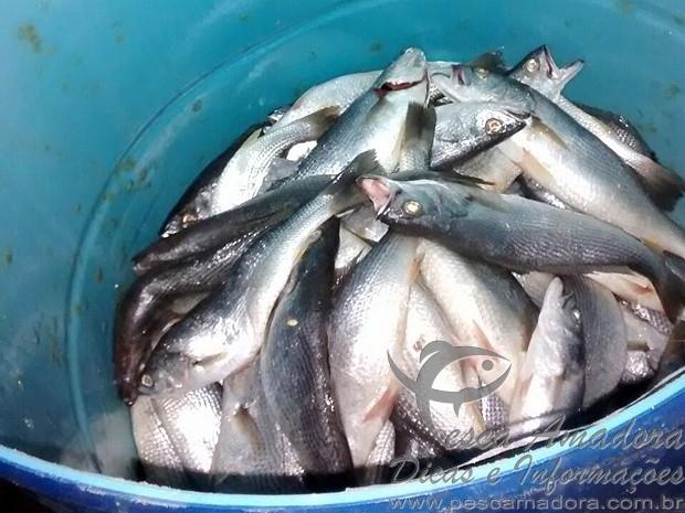 150kg de sardinha apreendido em Juiz de Fora-MG