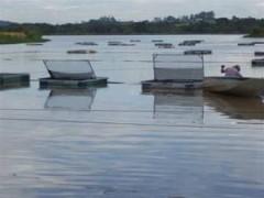 piscicultura-tanque-rede
