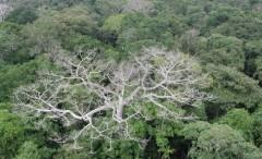 floresta-amazonica-secajpg