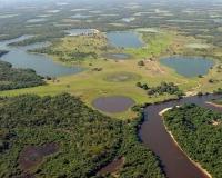 Peixes esportivos do Pantanal