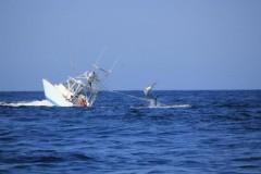 marlin-vira-barco01