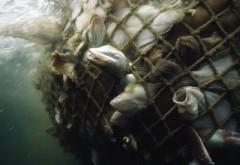 pesca-marinha