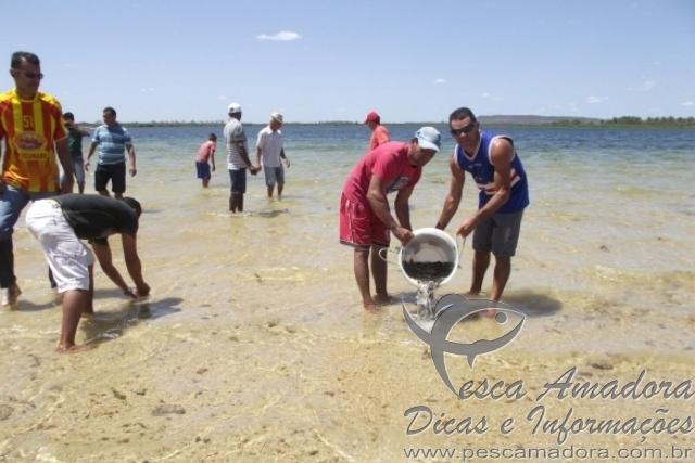 210 mil alevinos sao inseridos em barragem para conter piranhas no Piaui