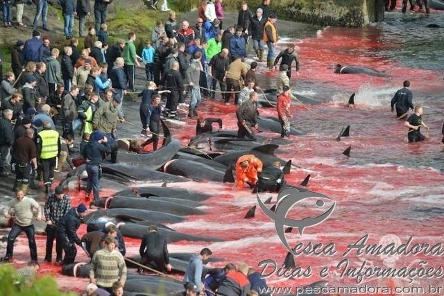 250 baleias mortas nas Ilhas Faroe na Dinamarca