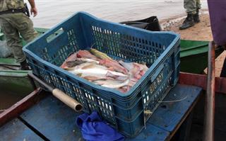 9 kg de pescado apreendido no Parana