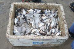 Acao conjunta resulta na apreensao de redes utilizadas na pesca ilegal no RN 4