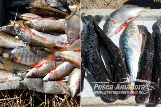 agencia-de-defesa-agropecuaria-incinera-uma-tonelada-de-pescado-no-para
