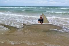 Americano pesca Tubarao-Martelo de quase 4m na Costa do Texas-USA 2