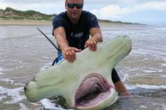 Americano pesca Tubarao-Martelo de quase 4m na Costa do Texas-USA