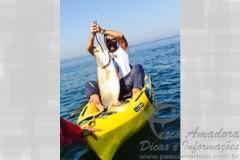 Angelo Neto com pescada amarela fisgada no Guaruja-SP 2