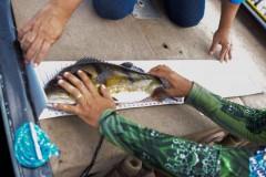 Apem vai premiar os melhores do ano da pesca esportiva no estado do Amazonas