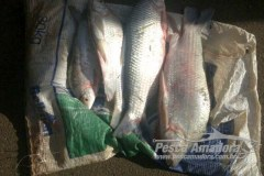 Apos bater em viatura PMA prende tres por pesca ilegal no Rio da Prata em MG