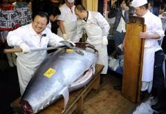 Atum vermelho em leilao no Japao