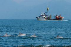 Atuneiro pescando em area de preservacao na Baia de Sepetiba-RJ