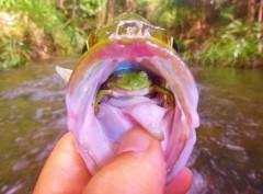 Australiano fisga peixe com sapo vivo na boca