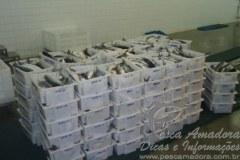 Barco de arrasto de tainha e autuado em 122 mil por pesca ilegal