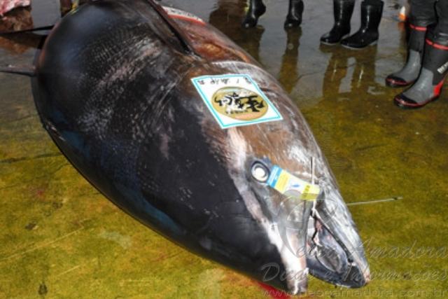 Barco pesqueiro captura atum azul de 417 kg no Japao