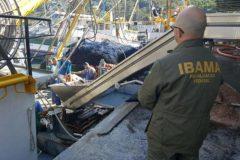 Barco que conseguiu licenca na justica e apreendido por pesca ilegal em SC 2