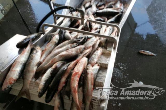 Barco que conseguiu licenca na justica e apreendido por pesca ilegal em SC 3