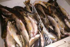 batalhao-ambiental-apreende-tarrafa-espinhel-e-130-kg-de-pescados-em-aruana-go
