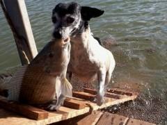 Cachorra pesca em fazenda particular e vira atracao