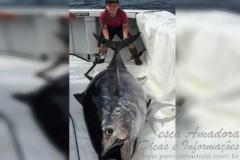 Canadense de 10 anos fisga atum de 220kg 2