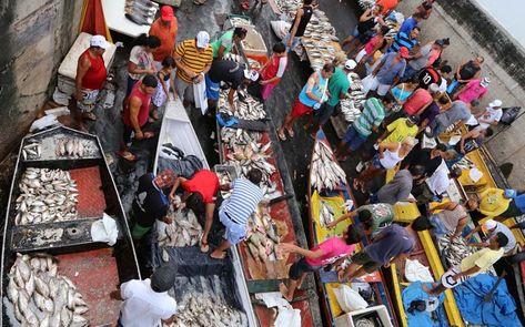 Canoeiros vendem peixes ao lado do mercado em Manaus-AM