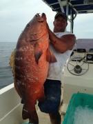 Caranha gigante pescada no Golfo do Mexico