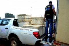 Cerca de 200 kg de pescado sao apreendidos no Lago de Palmas-TO 2