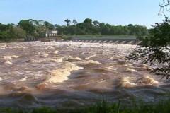 Chuva eleva nivel do Rio Mogi Guacu e favorece piracema em Pirassununga-SP