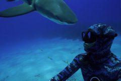 Cinegrafista e atingido por tubarao e mascara quebra durante mergulho nas Bahamas