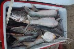 Cipa promove acao de combate a pesca predatoria no Rio Branco em RR 2