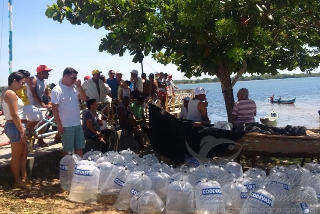 Codevasf insere 300 mil alevinos em trecho do Rio Sao Francisco em Sergipe