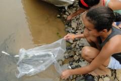 Codevasf insere dez mil alevinos em trecho do Sao Francisco em Iguatama-MG