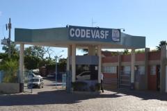Codevasf produziu cerca de 3,5 milhoes de alevinos no semiarido pernambucano 4