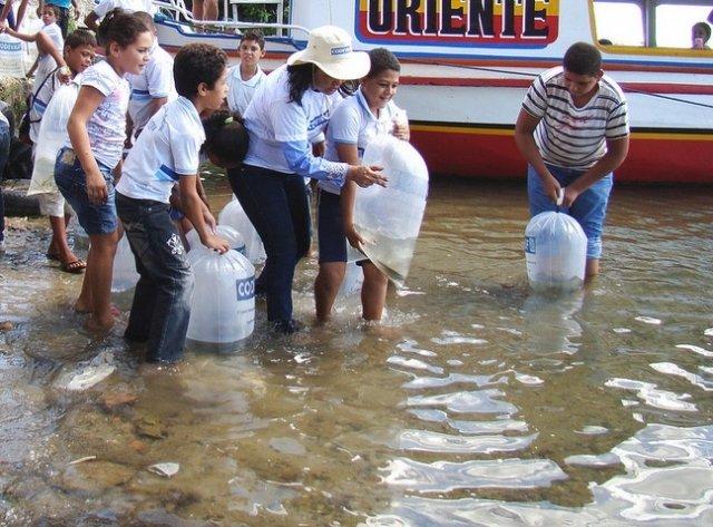 Codevasf solta 30 mil alevinos no rio Sao Francisco em Sergipe