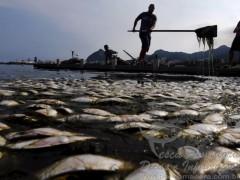 Comlurb retira 27 toneladas de peixes mortos da Lagoa Rodrigo de Freitas no Rio de Janeiro
