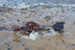 corpo-de-uma-suposta-sereia-morta-e-filmado-no-litoral-da-inglaterra-2