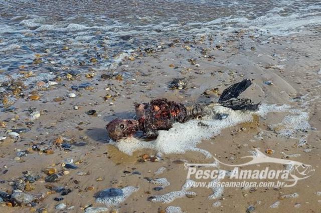 corpo-de-uma-suposta-sereia-morta-e-filmado-no-litoral-da-inglaterra