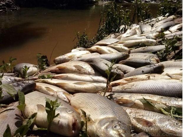 Curimbas mortas no rio tiete na regiao de Salto-SP