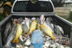 Dema apreende 437 kg de pescado irregular em MT