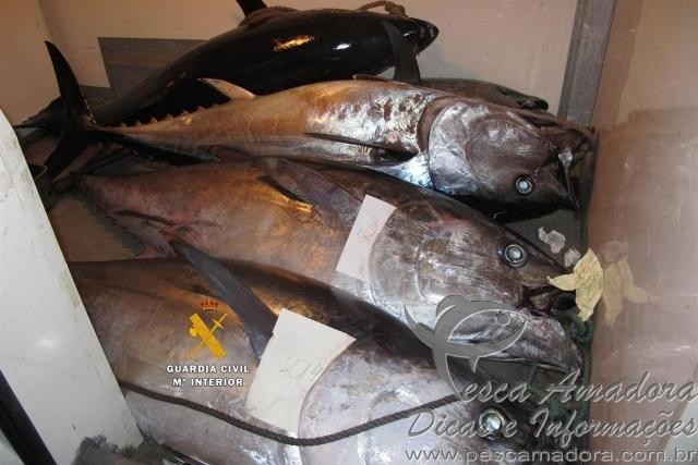Dezoito pessoas sao indiciadas por pesca ilegal de atum rabilho na Espanha
