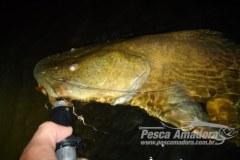 Dicas de pesca noturna
