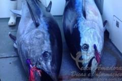 Dois irmaos fisgam atuns na Tasmania e podem bater o recorde Jr 2