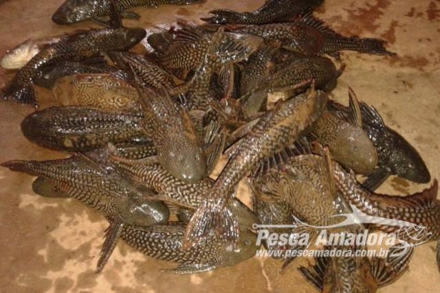Dois sao presos em flagrante por pesca predatoria no Rio Parana