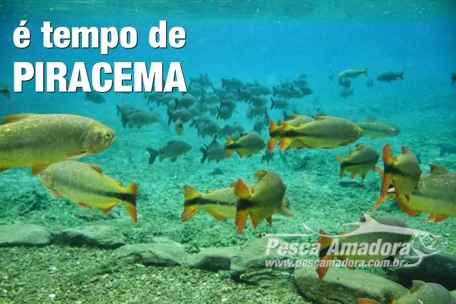 e-tempo-de-piracema-periodo-de-defeso-em-todo-o-brasil-capa