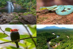 expedicao-descobre-40-novas-especies-na-serra-da-mocidade-em-rr