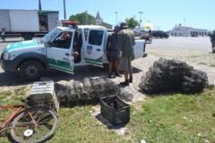 Fiscais apreendem redes e armadilhas em Penedo-AL 2