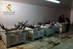 Fiscalizacao apreende 1.500kg de espadarte pescados ilegalmente na Espanha